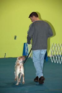 Sharpei Puppy Training Sarah Lowell Dog Training